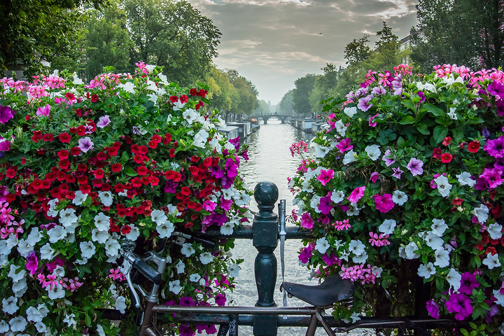 Flowers Over Canal, Amsterdam, The Netherlands