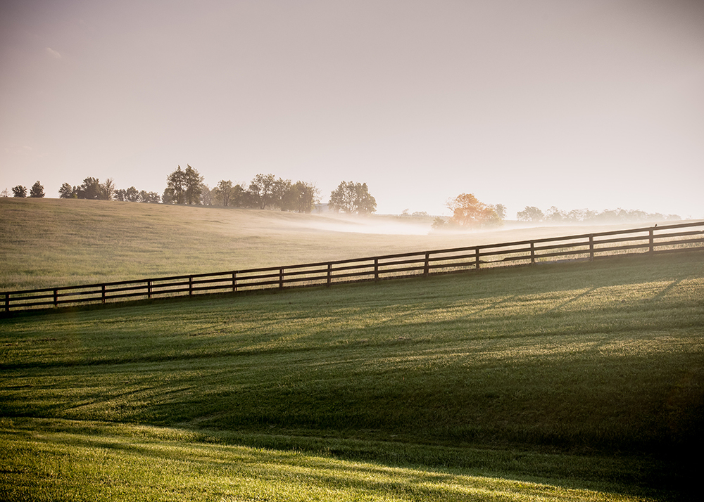Long Shadows of Horse Fences in the Fog, Lexington, Kentucky
