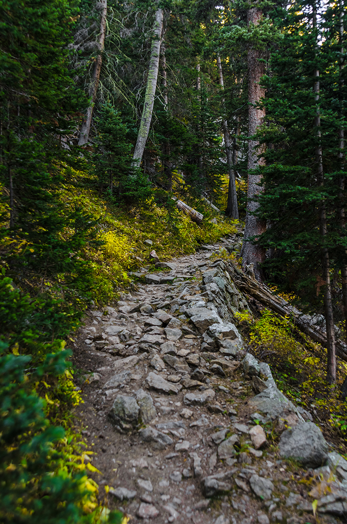 Changing Colors on the Trail to Odessa Lake, Rocky Mountain National Park