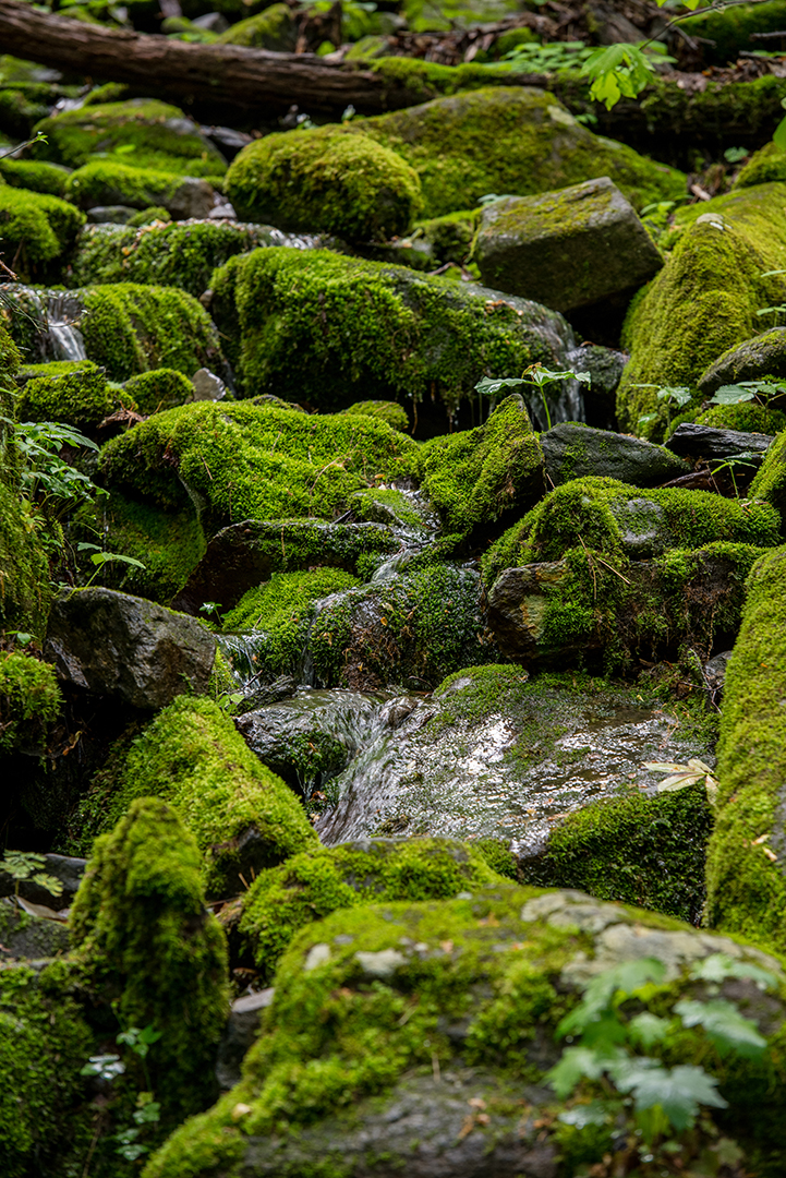 Close Up of Moss Covered Rocks, Great Smoky Mountains National Park