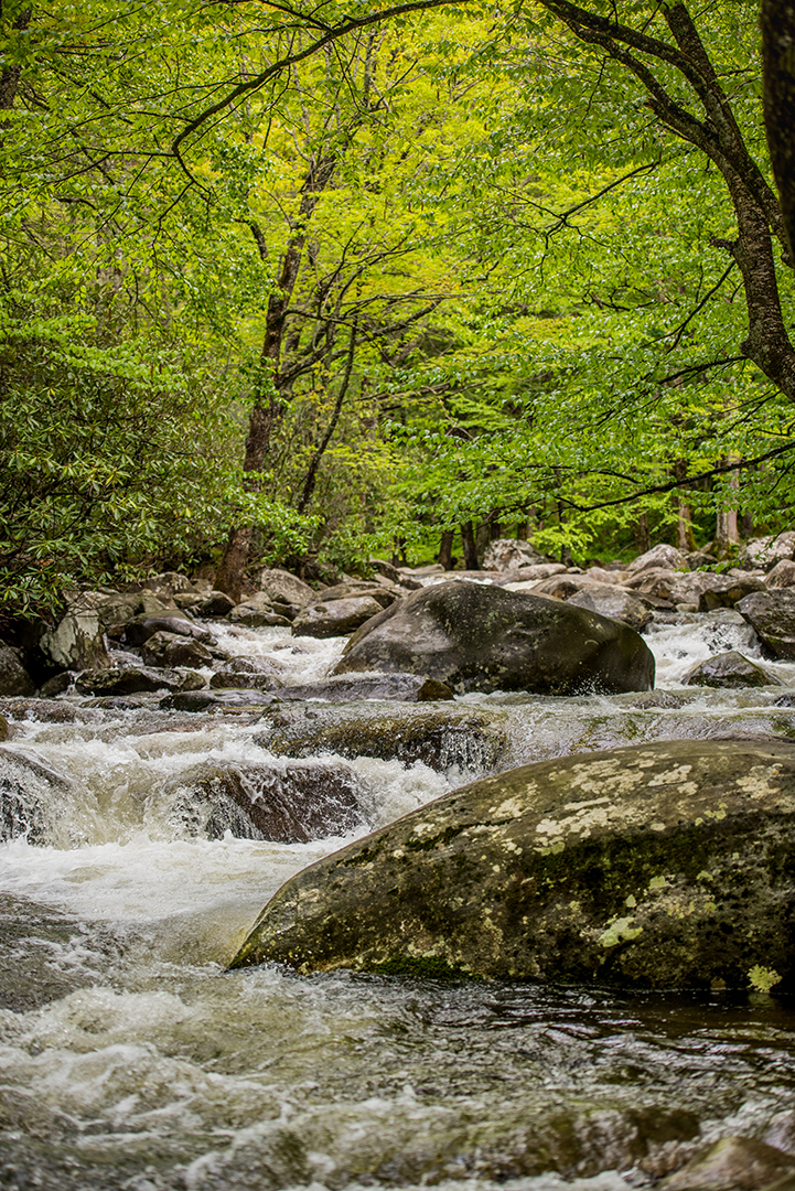 Creek Running Near Picnic Area, Great Smoky Mountains National Park