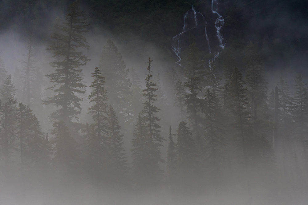 Pine Trees and Water Fall Peek Through Thick Fog, Glacier National Park