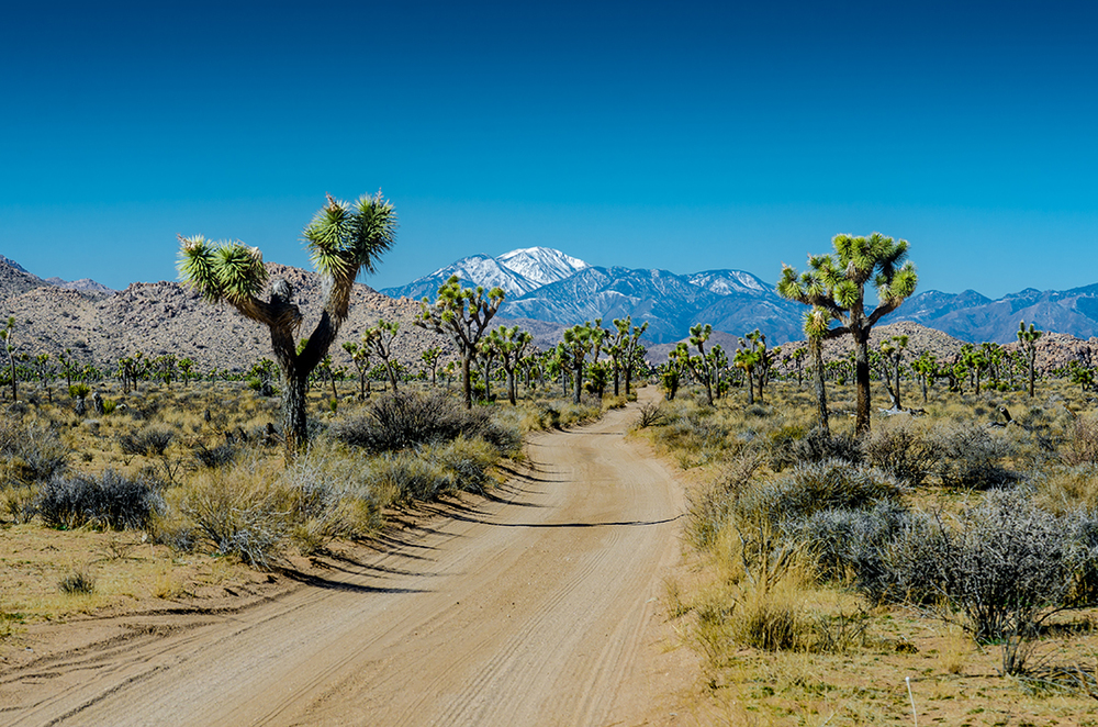 Snow Capped Mountain Overlooks Desert Road, Joshua Tree National Park