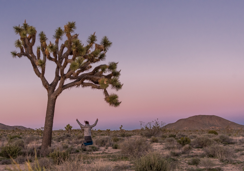 Woman Leaps Under Large Joshua Tree