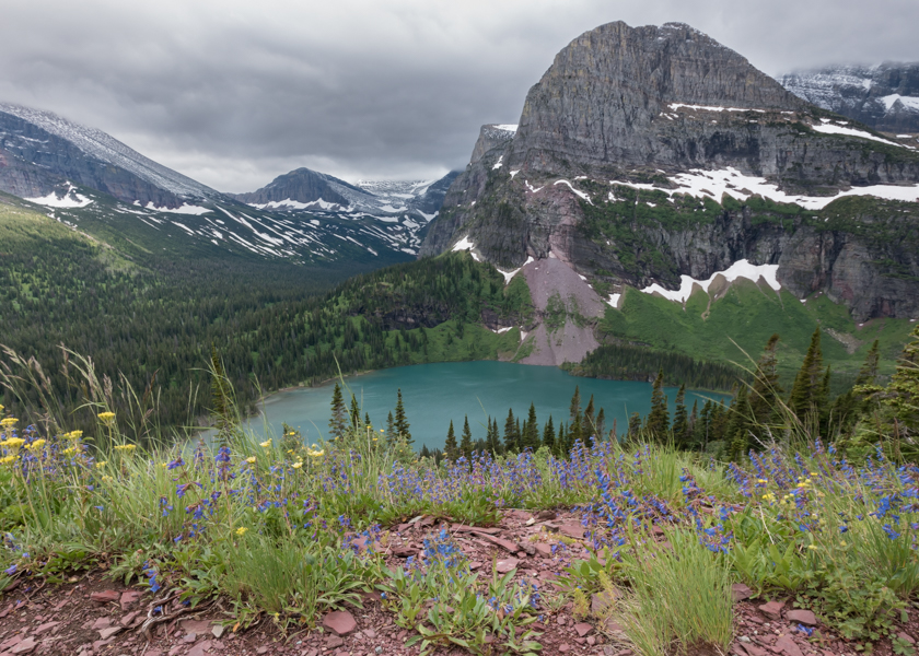 Overlooking Wildflowers and Grinnell Lake