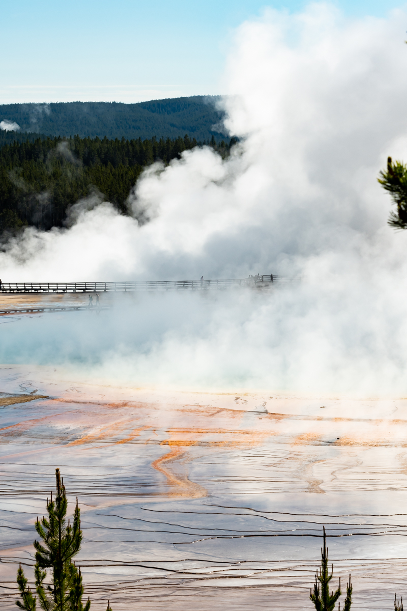 Thick Steam Rising from Grand Prismatic with Runoff