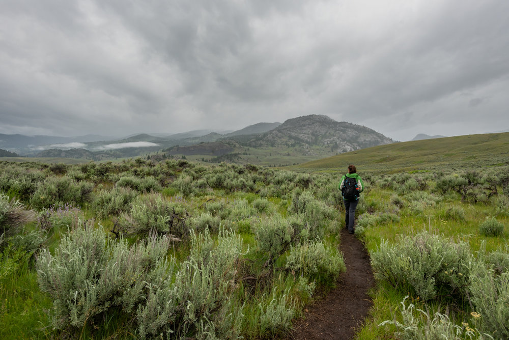 Woman Walks Through Trail in Wyoming Wilderness
