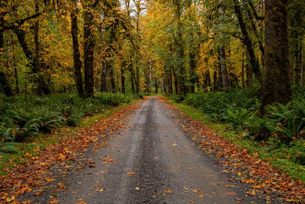 Road through Quineault rainforest