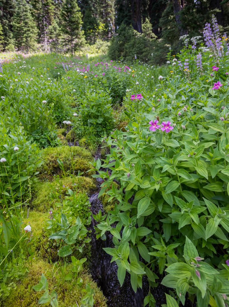 Creek Cuts Through Meadow of Wild Flowers