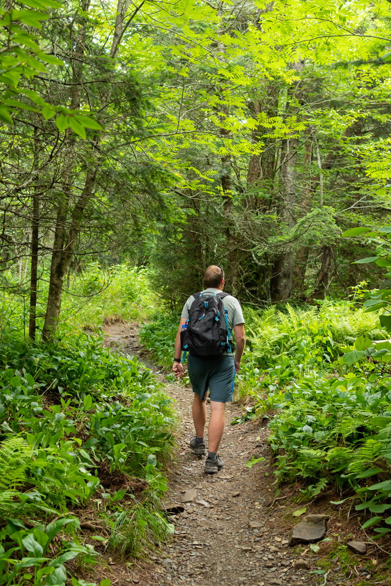 Man Hikes Through Forest in Smokies