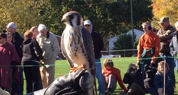 brian and falcon.jpg