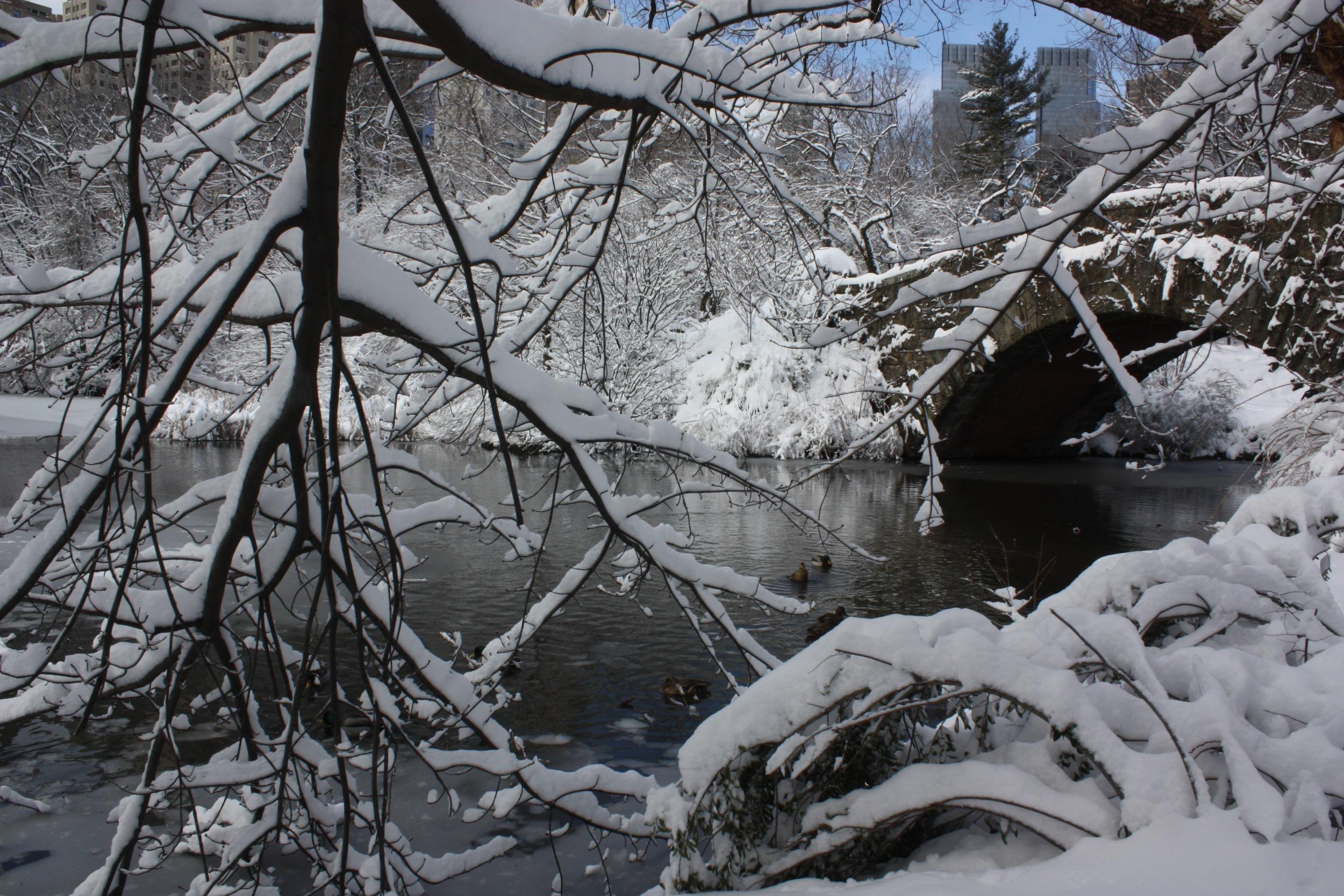 snowy favorites - 1