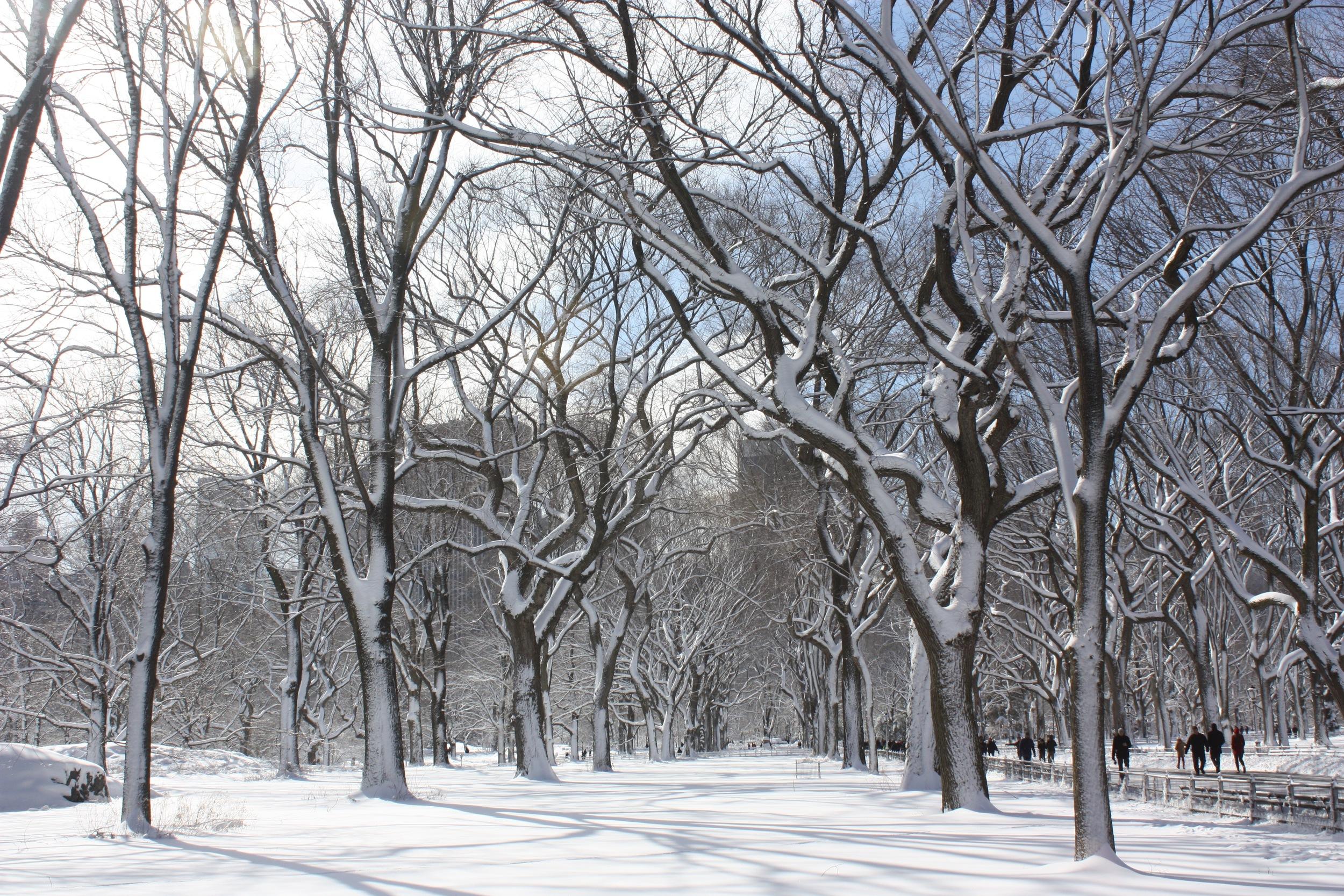 snowy favorites - 4