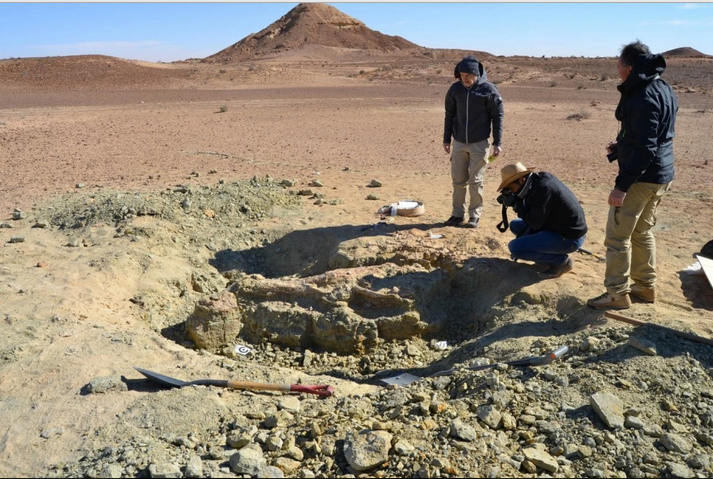 The excavation site of the first specimen of the new crocodile-like species, Machimosaurus rex. These fossils were found in the Tataouine region of southern Tunisia, on the edge of the Sahara Desert.  Credit: Federico Fanti/Bologna University