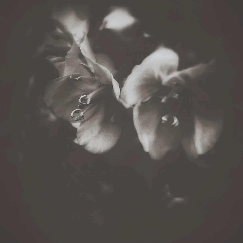 crescent_feeling