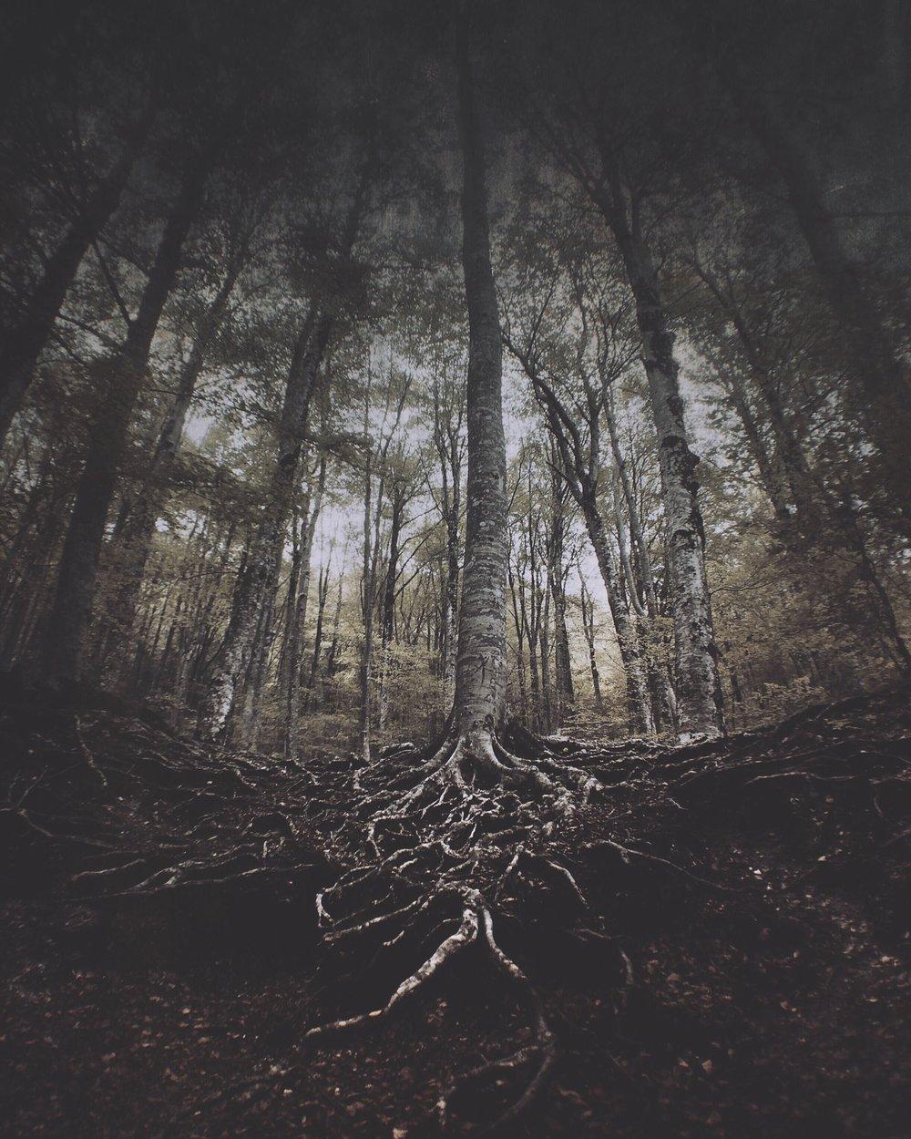 trees-IMG_2517.JPG