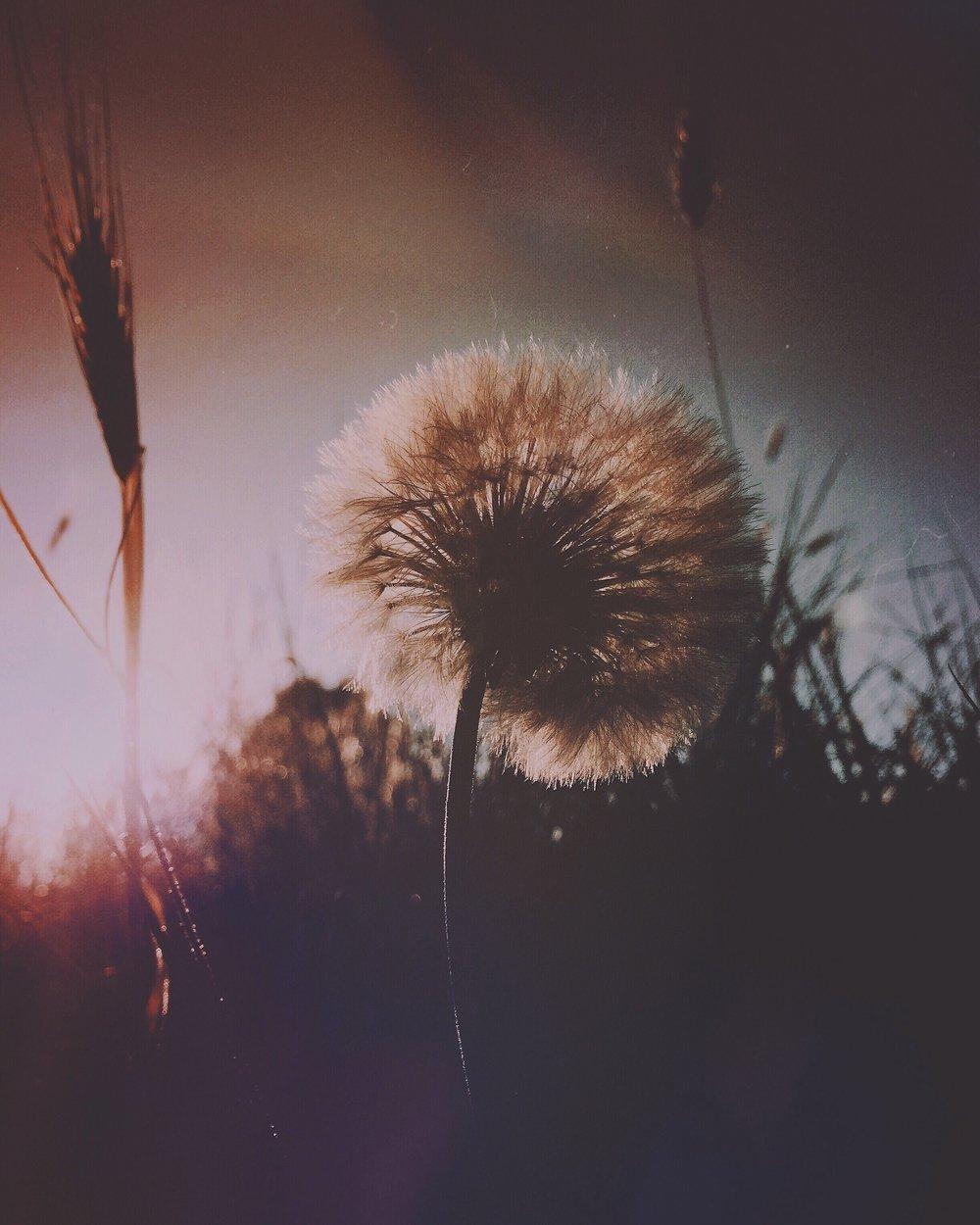 field-IMG_9629.JPG