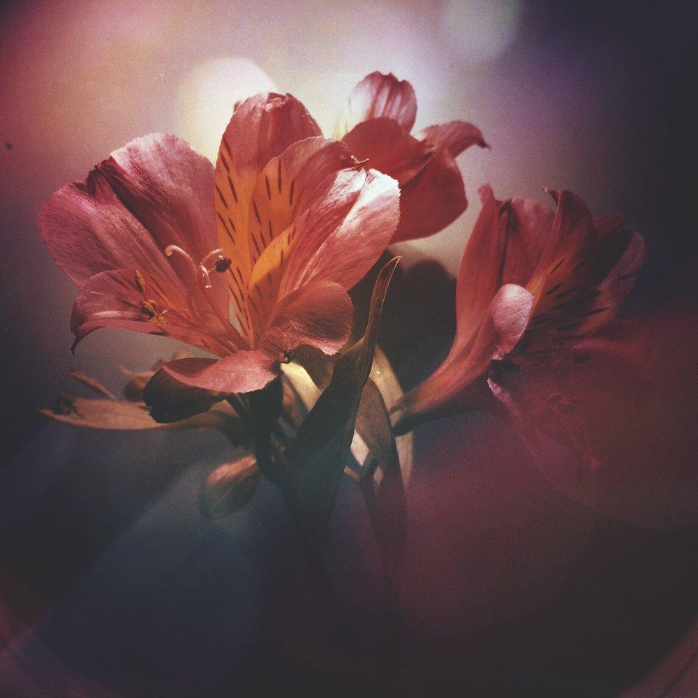 flower-IMG_9168.JPG