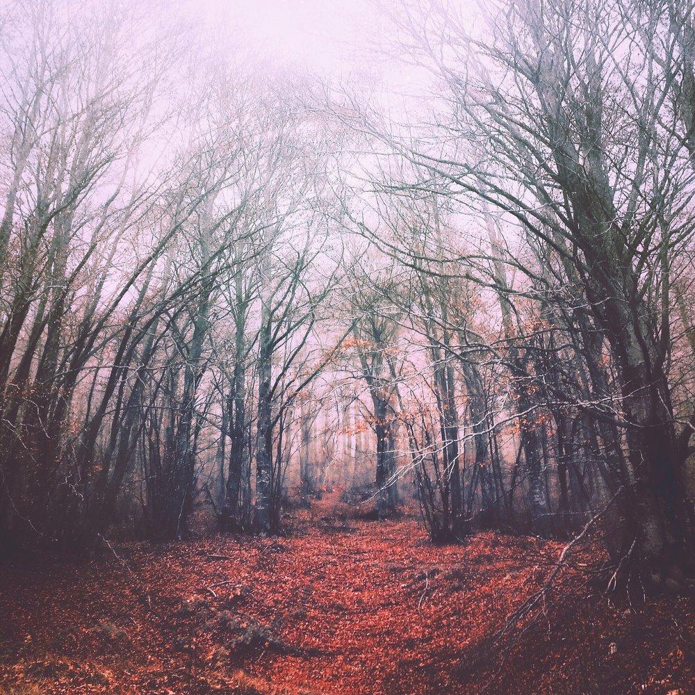 trees-IMG_6114.JPG