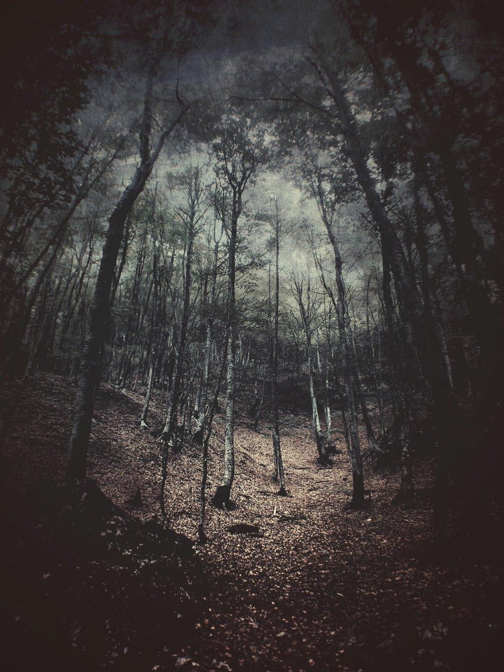 trees-1469694184635.jpeg