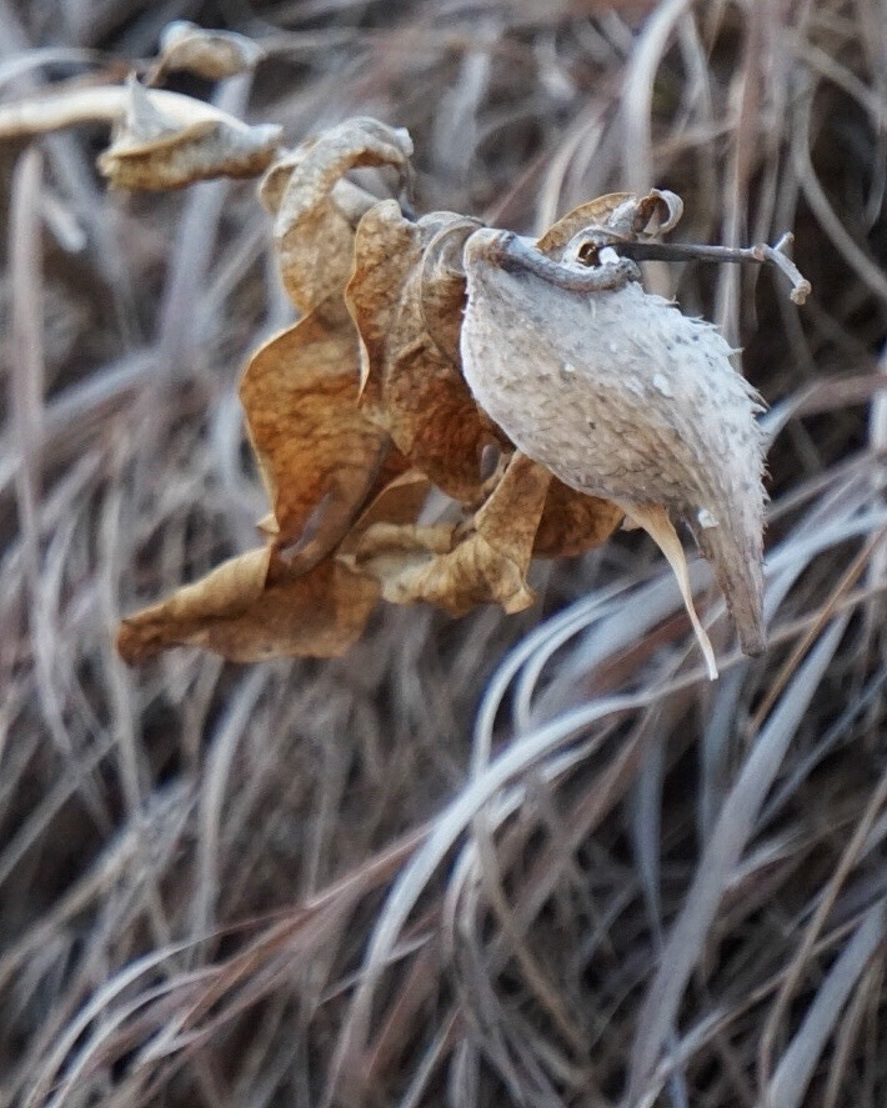 freelittleblackbird.JPG