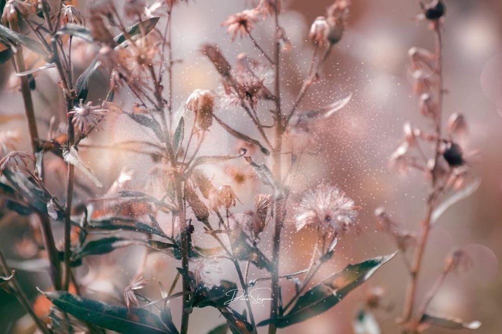 @di_flower_of_the_desert - 1.jpg