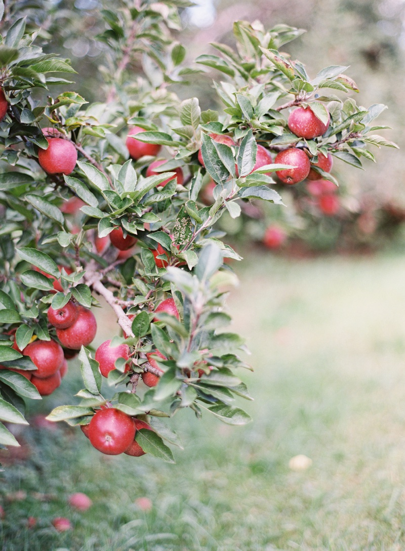appleorchard_engagement_8.jpg