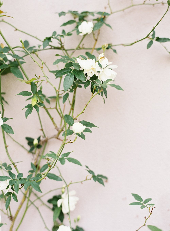 Charleston_Flowers