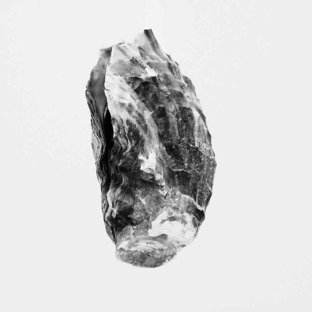 oyster 01.jpg