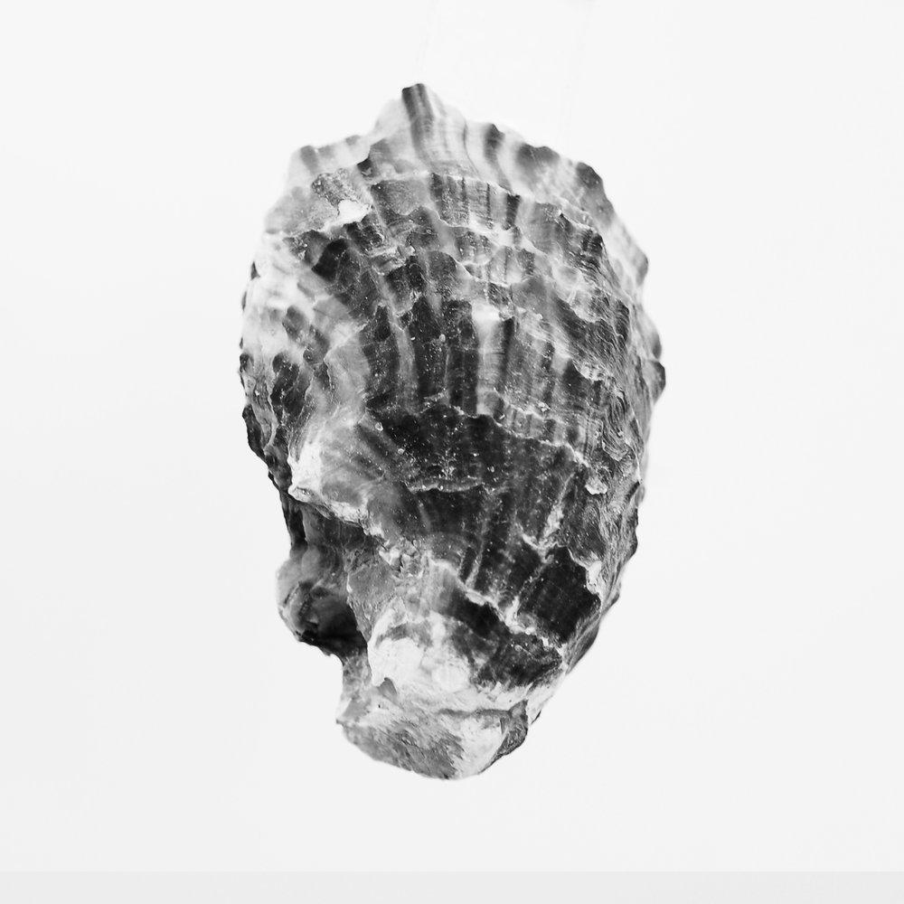 oyster 02.jpg