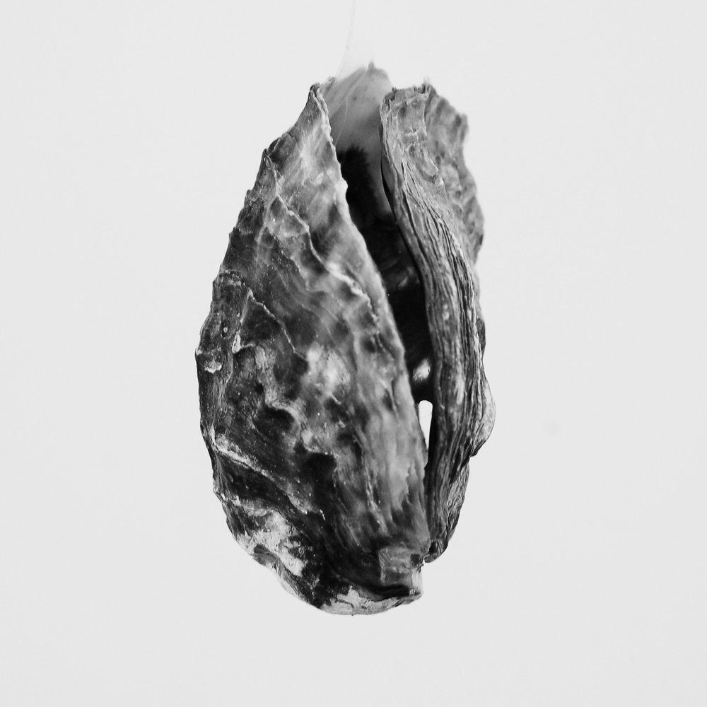 oyster 03.jpg
