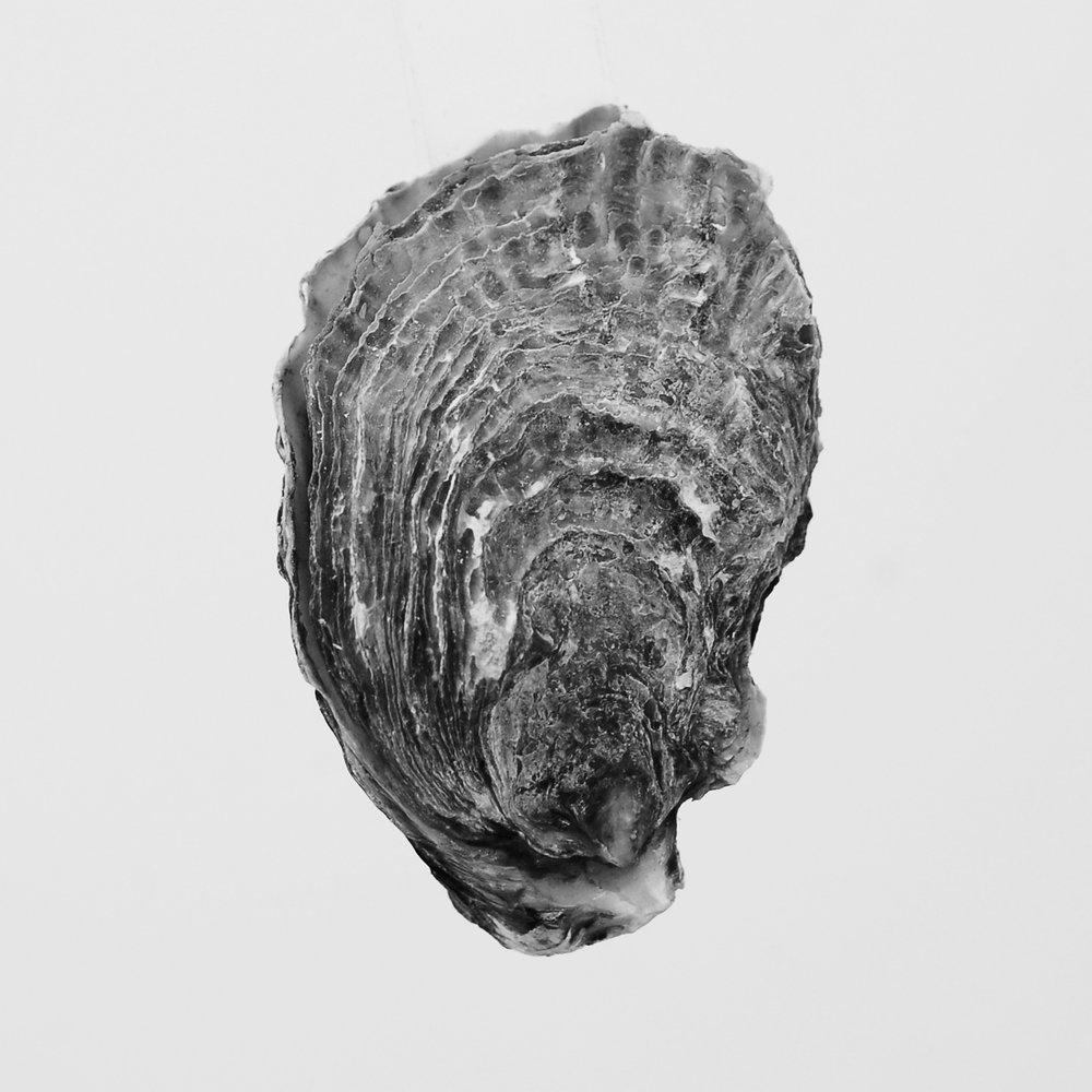 oyster 04.jpg