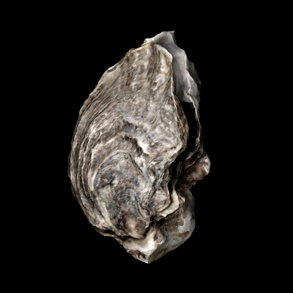 oyster 06.jpg