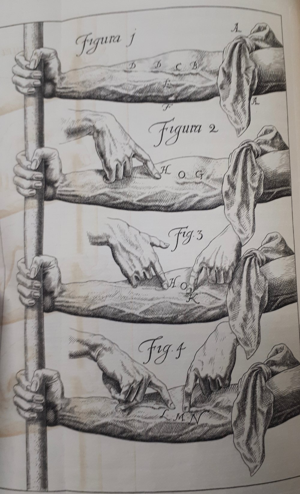 Harvey,  Exertatio Anatomica , pp. 56-7 from the Robinson Library edition.