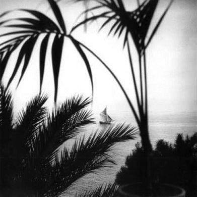 palm_trees_beach_large.jpg
