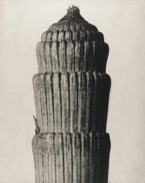 Karl Blossfelt III.jpg