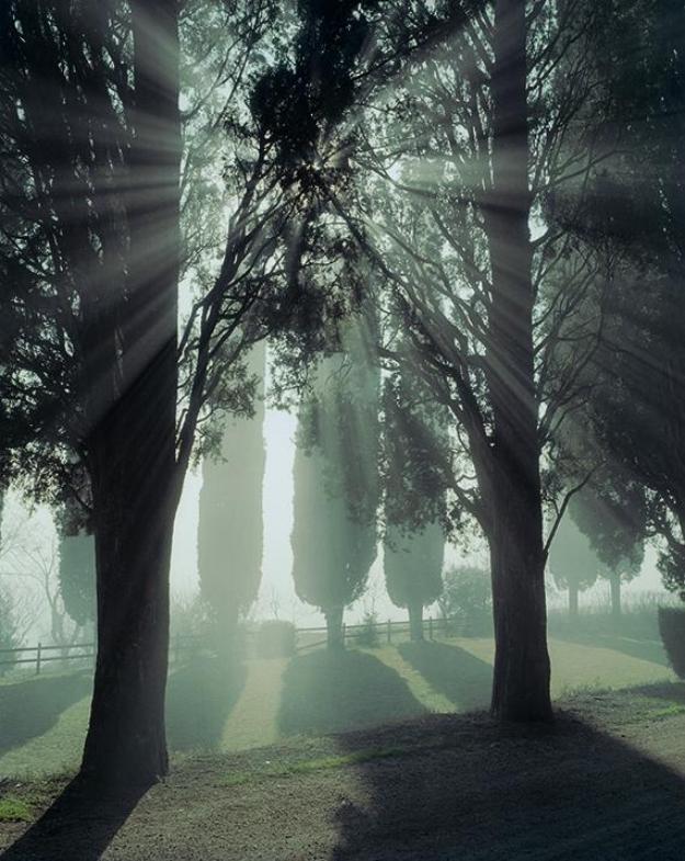 Photography: Joel Meyerowitz | Tuscany