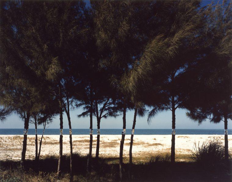 Australian-Pines-1977-760x597.jpg