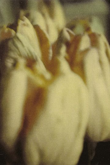 Cy Twombly 1985 Tulips.jpg