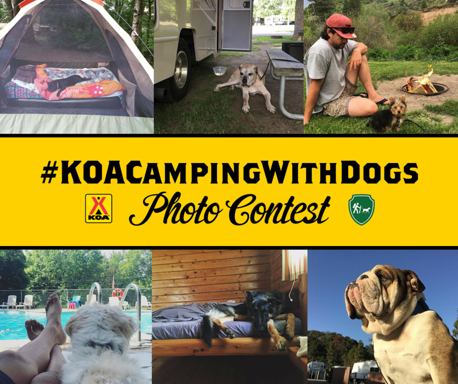 koacampingwithdogs-photo-contest-facebook-graphic_28678045971_o.png