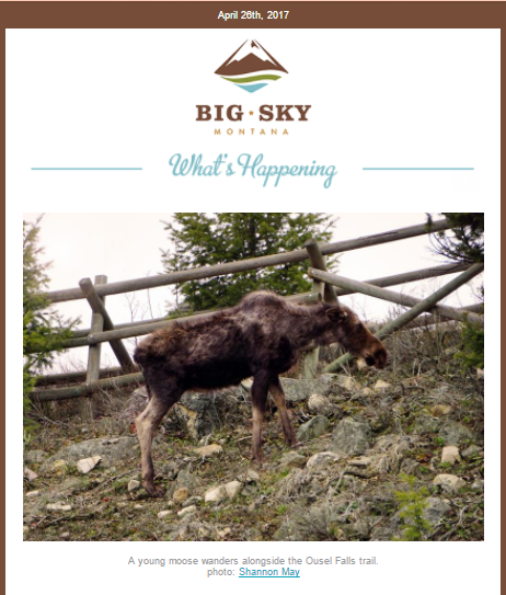 Big Sky Chamber Newsletter_Moose Photo.png
