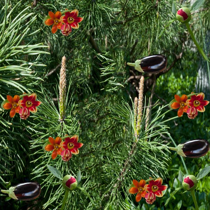 Flying Eggplant.jpg