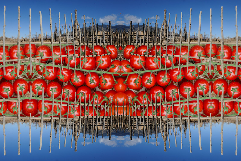 Tomato Fence