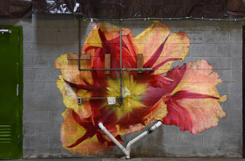 Tulip on the Wall