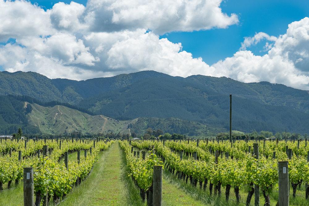 On the Marlborough Wine Trail