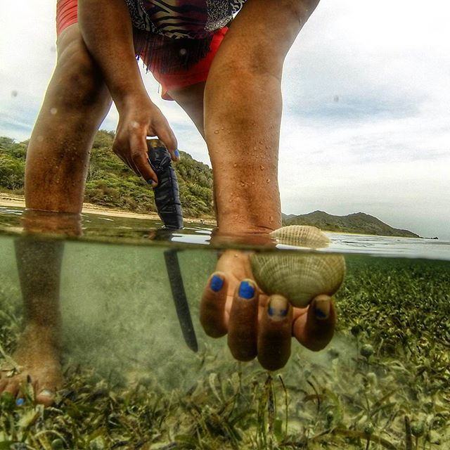 Trabajando con almejeras en Buen Hombre para entender mejor la condición de las almejas y hierbas marinas Working with clam harvesters in Buen Hombre to assess the condition of the clam population and seagrasses  #buenhombre #montecristinationalpark #seagrass #sustainablefishing