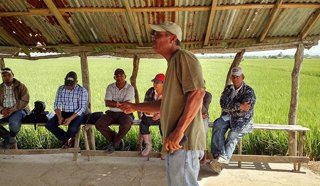 Freddie hablando con productores de arroz.