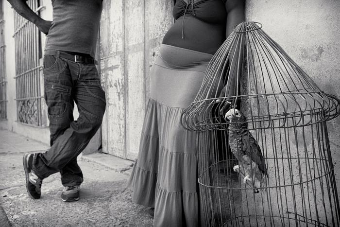 Mulhall-Brereton, Jenna_Parrot, Havana, Cuba_1576956.jpg