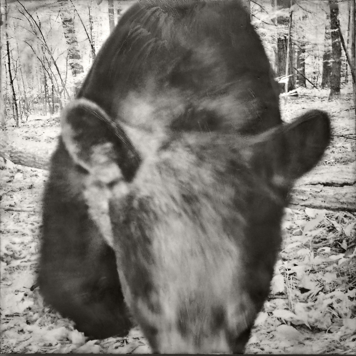 "Jill Skupin Burkholder   -    ""Bear Approaching""     -  $1200"