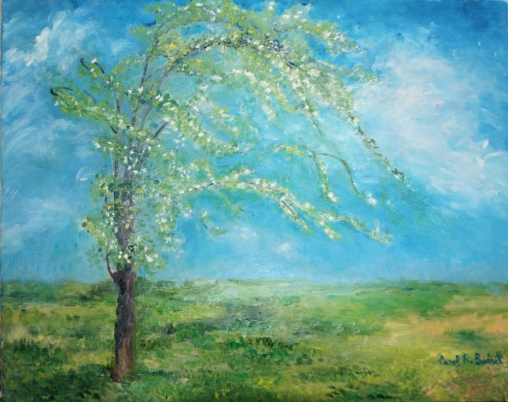 barrett_carolann_Blossoming Pear Tree_oil on canvas_16x20.jpg
